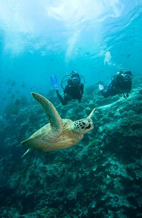 padi scuba diving puerto galera el galleon resort