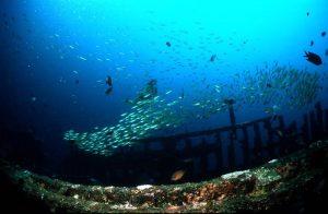 scuba diving puerto galera sabang wrecks