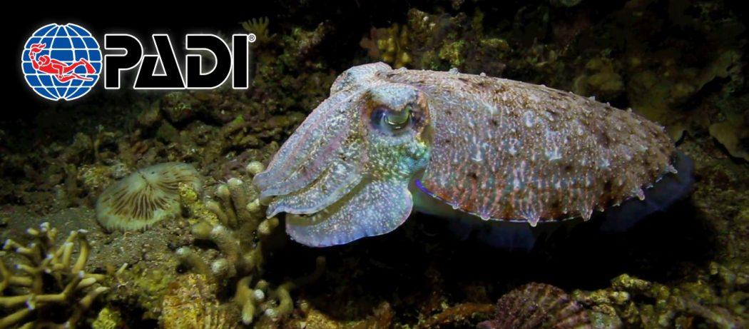 padi night diver course asia divers puerto galera