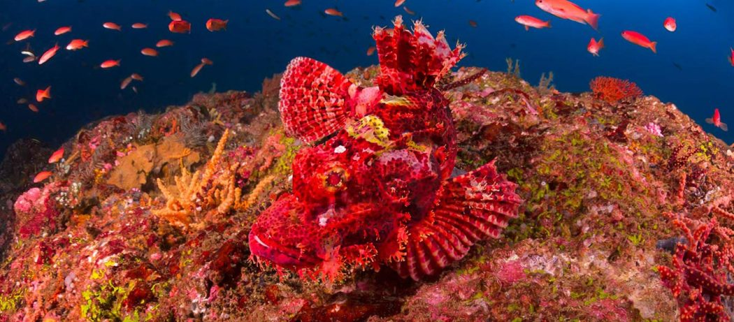 padi underwater naturalist course puerto galera