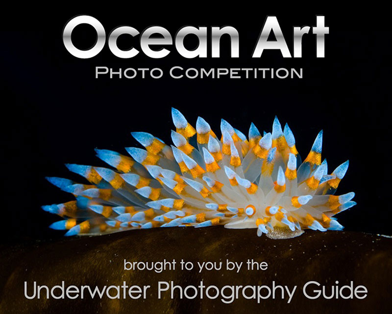 ocean art photo competition 2018