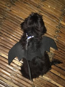 halloween asia divers puerto galera dog costume