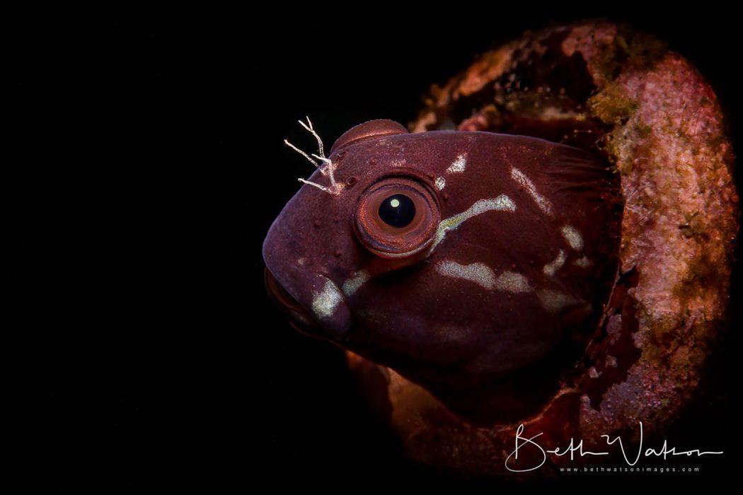 underwater photogrpahy worshop 2019 Asia Divers puerto galera