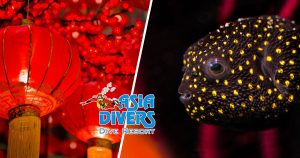 asia divers sabang puerto galera blog photography workshop chinese new year