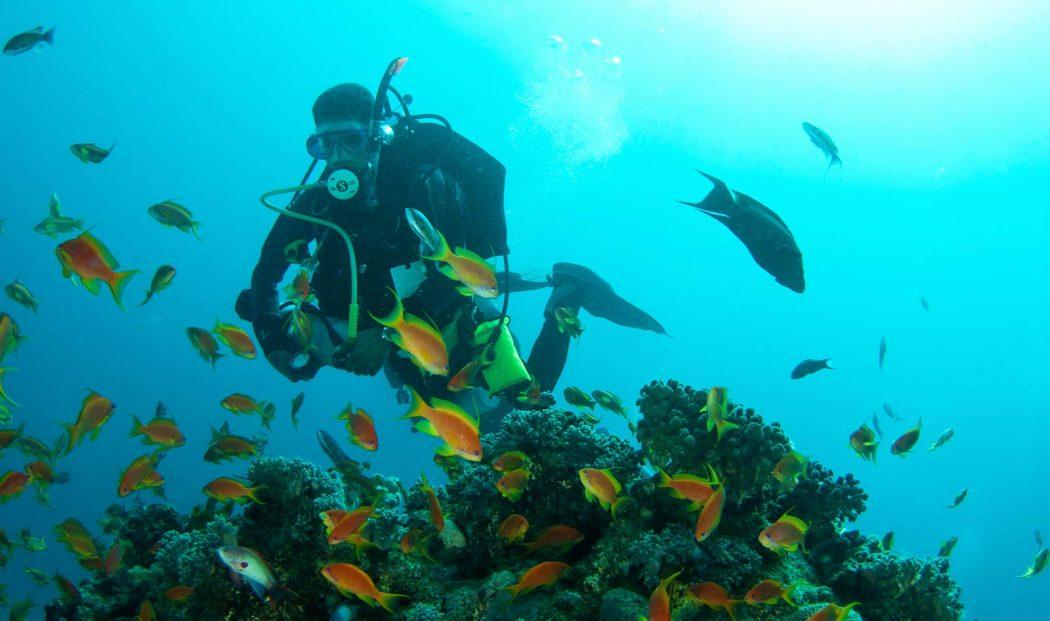 padi self reliant diver course puerto galera asia divers
