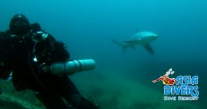diving with thresher sharks in Puerto Galera Philippines