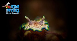 underwater photography at asia divers puerto galera philippines