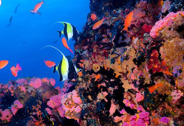 verde island dive site puerto galera philippines
